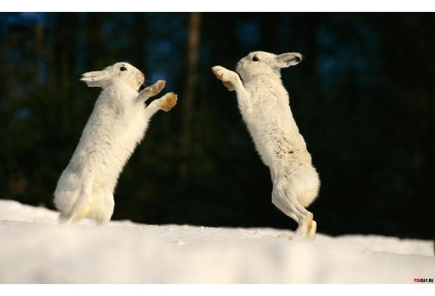 Картинки по запросу догонять двух зайцев ФОТО