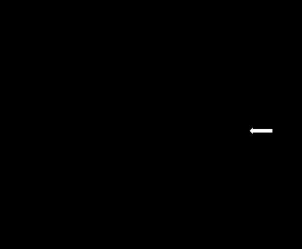 Ролевая модель Шиндлера